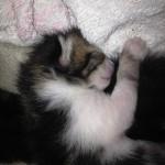 bébé chaton 1 semaine petit ange