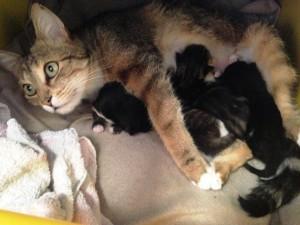 bébé chaton 1 semaine tétée famille