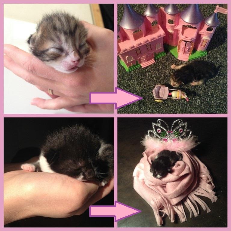 chaton male ou femelle femelles filles