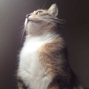 gestation chat femelle attend cigogne 150217