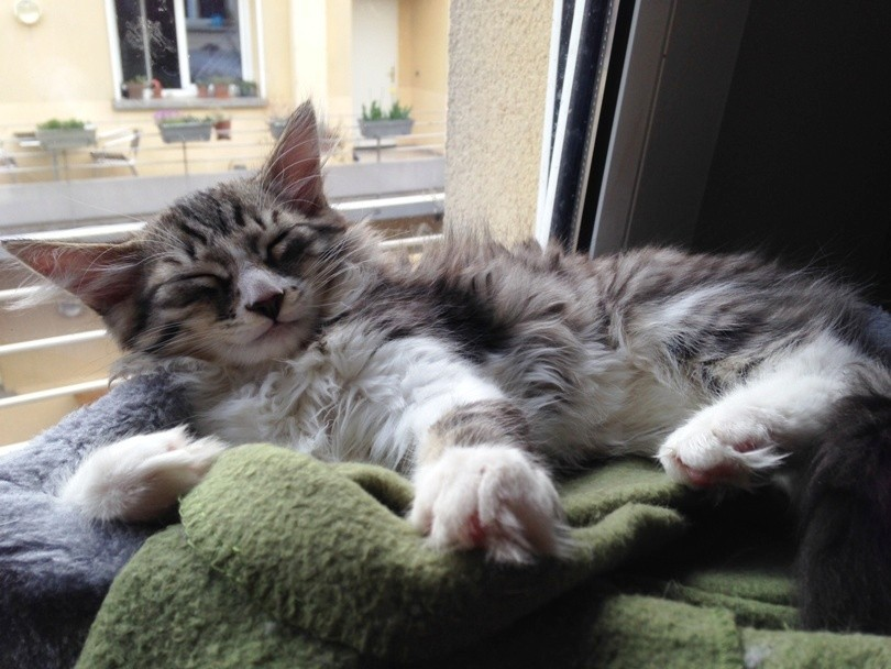 Annonce Chaton A Donner Paris 2 Males A Adopter Mon Chat Mignon Fr