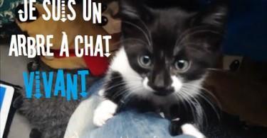 Arbre a chat vivant & Chatons mignons ! 2mn détente